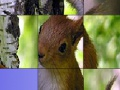 ছবি squirrels ধাঁধা স্লাইড